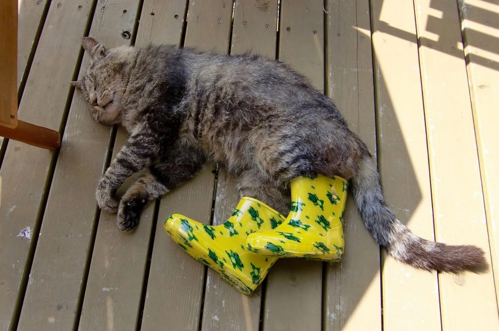 長靴を履いた猫
