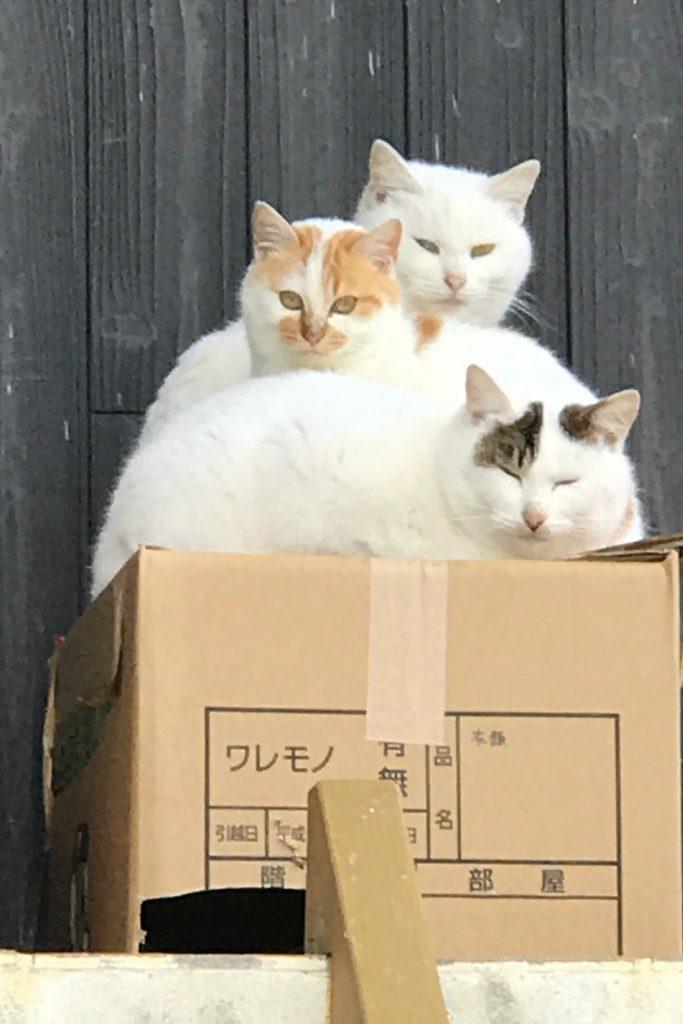 エグニャイル 猫
