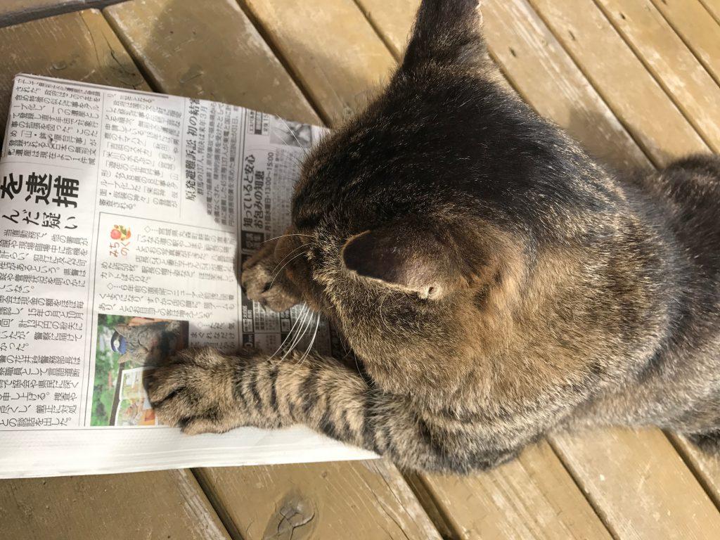 とらお 新聞