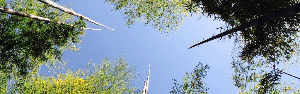 竹林の抜け道